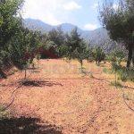 Larnaca Property for sale - properties in Cyprus