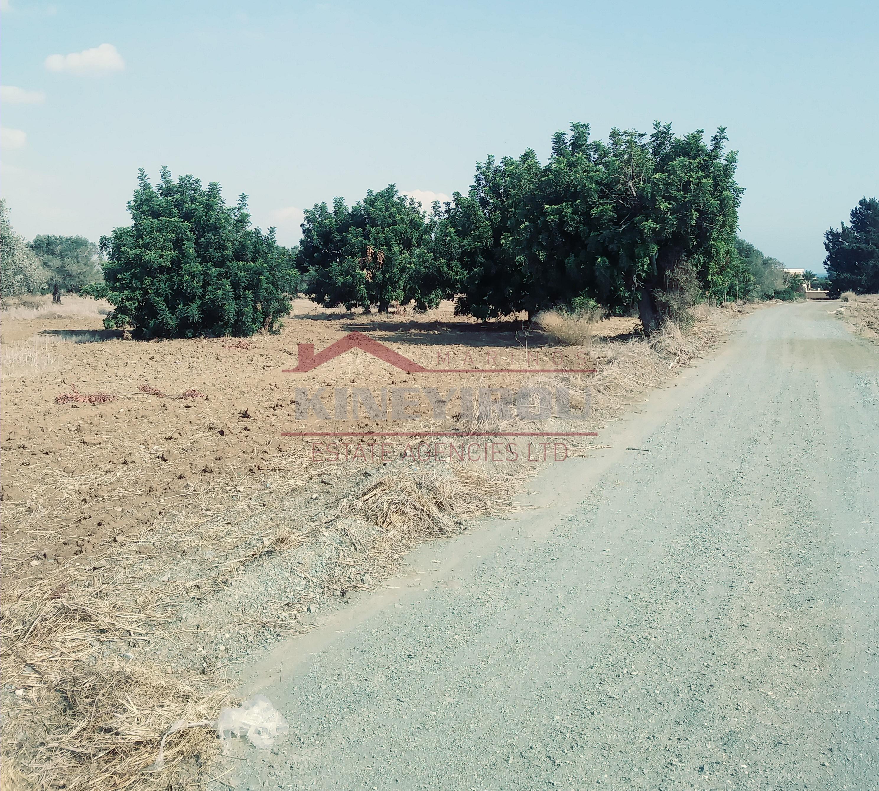 Land In Mazotos Village, Larnaca