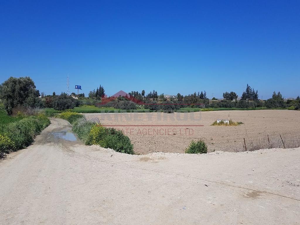 Field in Livadia, Larnaca