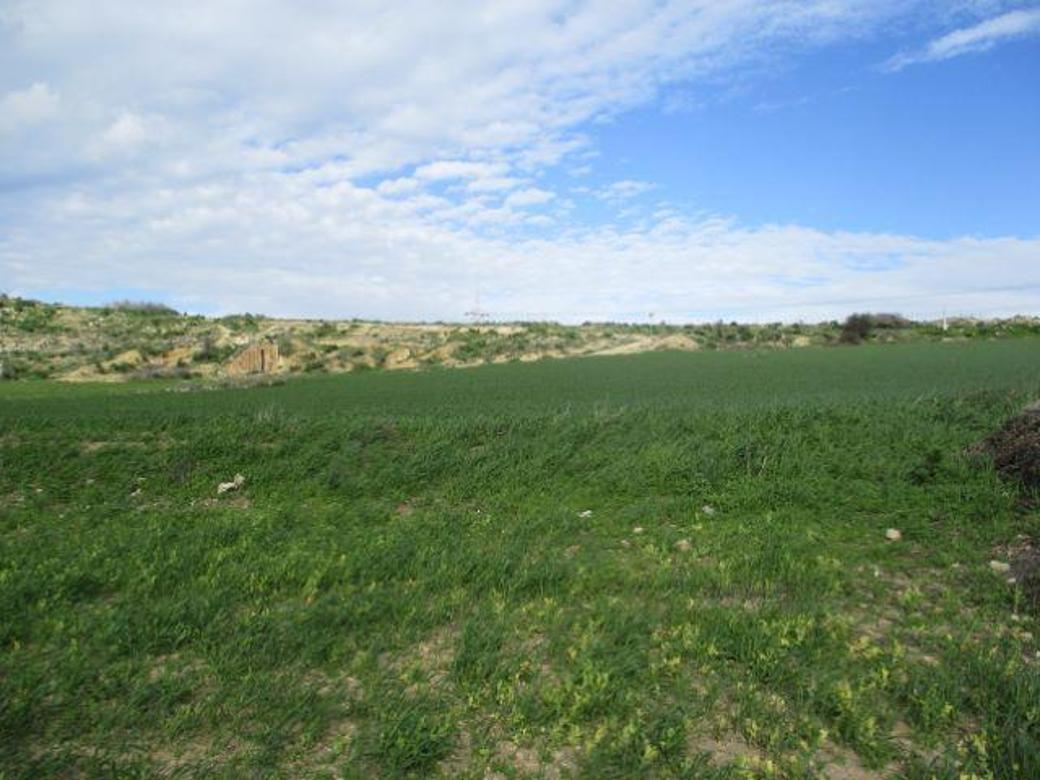 Field in Pyla, Larnaca