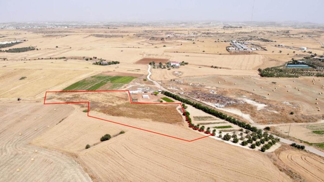 Shared field in Psimolofou, Nicosia