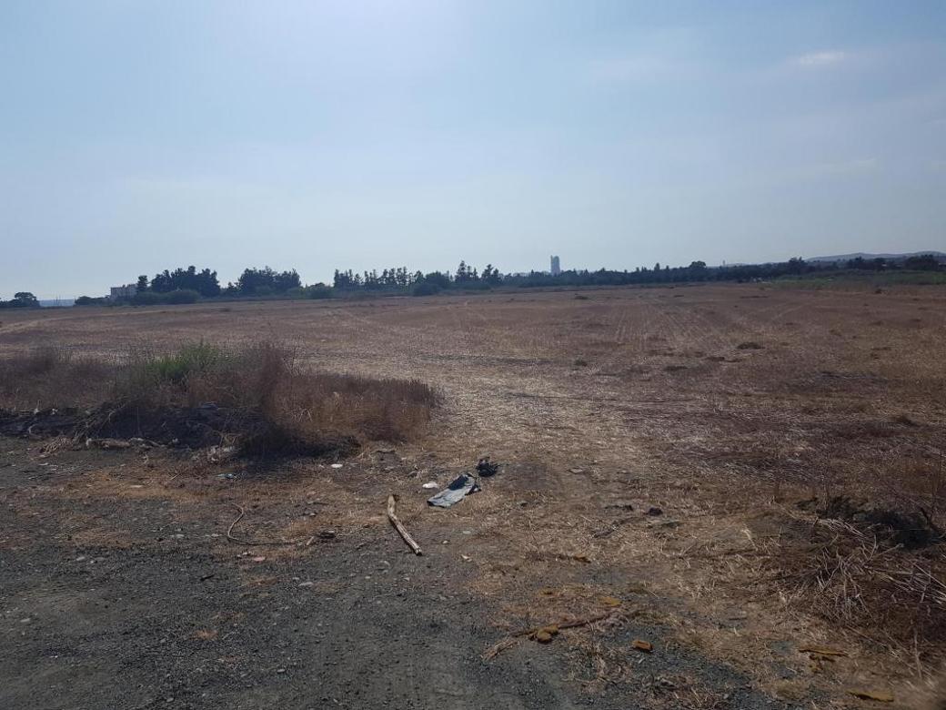 Shared field in Zygi, Larnaka