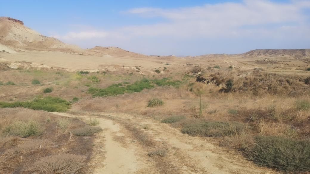 Field in Pera, Nicosia